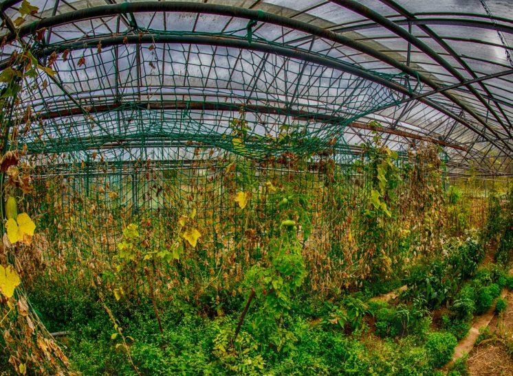 Alte Gärtnerei